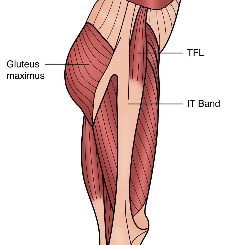 ITB, TFL & Gluteus Muscles