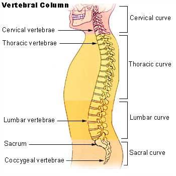 Lordosis - natural curvature